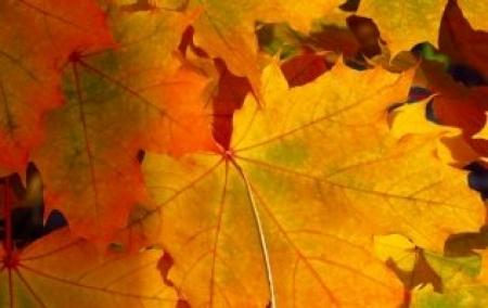 Co wydarzy się w naszym przedszkolu w październiku?